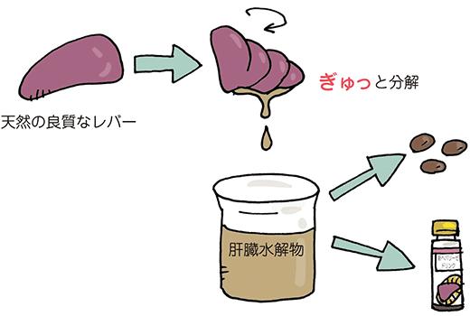 肝臓水解物の生成方法